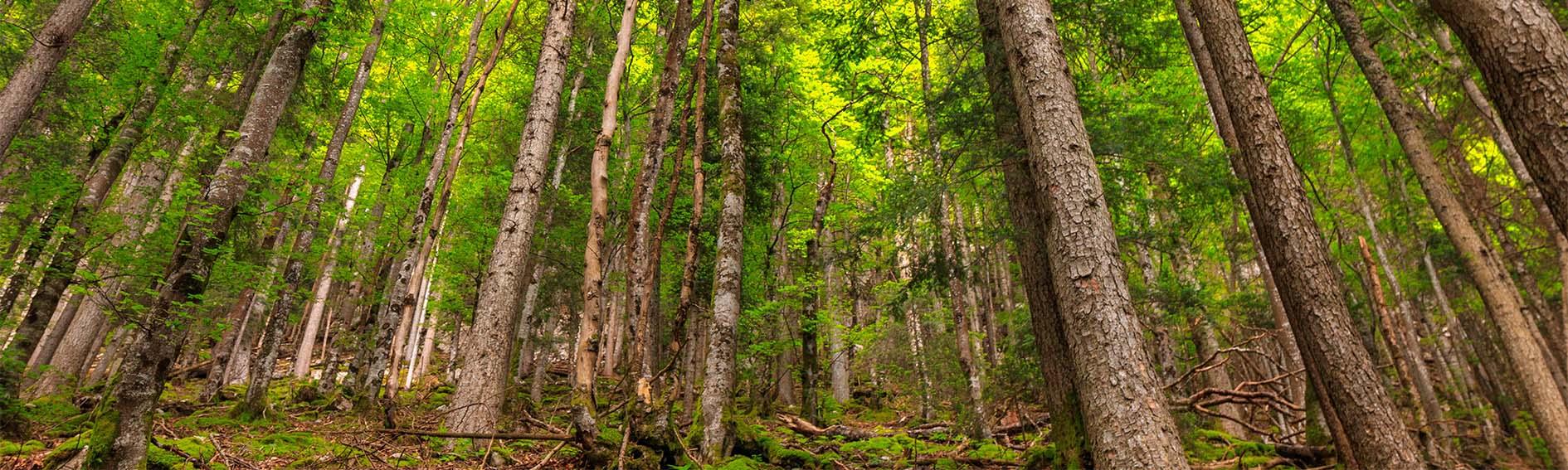 Investir dans une forêt française en 2019
